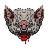 Head vampire bat. Angry head vampire bat Vector illustration Stock Images