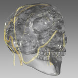 Head veins. A stylized 3D visualization of the brain with some Stock Images