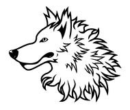 head vit wolf Arkivbild