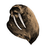 Head walrus looking into the distance thick, sketch vector graph Royalty Free Stock Photography