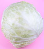 Head of White Cabbage on Pink Background Stock Image