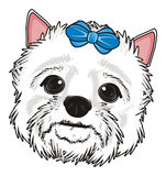 Head of white dog with blue bow Royalty Free Stock Photo