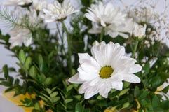 Head of the white flower Stock Photos