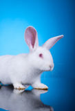 Head of a white little rabbit Stock Images