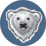 Head white polar bear Royalty Free Stock Photo
