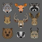 Head of wild animals set, portrait of wolf, doe, raccoon, squirrel, deer, hare, bear, badger and lynx hand drawn vector. Illustrations on a grey background stock illustration