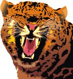 Head of wild cat Royalty Free Stock Photos
