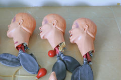 Head and windpipe dummy for CPR medical refresher  training Stock Photo