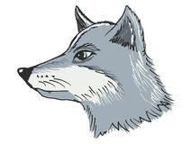 Head of wolf Royalty Free Stock Photos