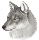 Head of wolf Stock Photo