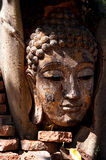 Head of wood Buddha in The tree Stock Photography