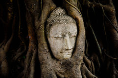 Head of wood Buddha in The Tree Roots Royalty Free Stock Images
