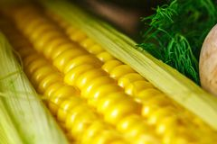 Head of yellow corn close-up soft focus royalty free stock photography