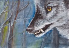 Head yellow-eyed wolf in the background of the dark blue forest Stock Images