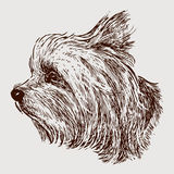 Head of a yorkshire terrier. Vector image of the head of a lap dog vector illustration