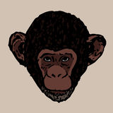 The head of a young chimpanzee Stock Photos