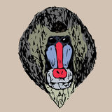 The head of a young daboon mandrill Stock Photography