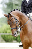 Head of a young dressage horse with unknown rider in action Royalty Free Stock Photo