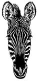 Head of a zebra. Black-and-white striped drawing of a head of a zebra Royalty Free Stock Photography