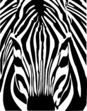 Head of a zebra close up. Negative vector illustration