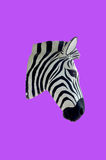 Head of zebra sculpture with painting Stock Photography