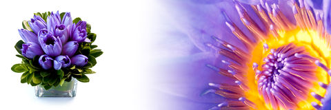 Header blue water lily Stock Images