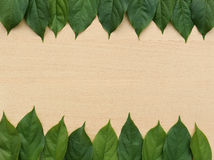 Header and footer border from fresh leaf Royalty Free Stock Photo