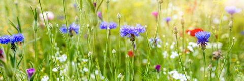 Header with native wildflowers, natural habitat for insects stock images