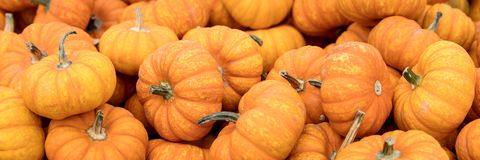 Header, Pumpkin or squash background, orange Cucurbita pepo Stock Image