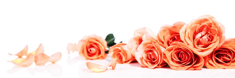Header with roses Stock Photography