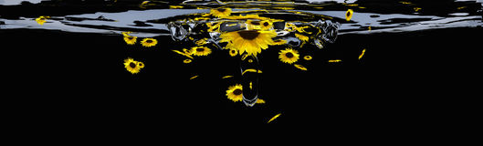 Header with sunflowers. Stock Images