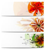 Header  flowers Royalty Free Stock Photography