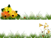 Headers with flowers, grass and ladybugs Royalty Free Stock Images