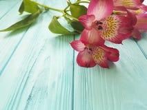Headflower del petalo di Alstroemeria su estate di legno blu di compleanno Immagini Stock