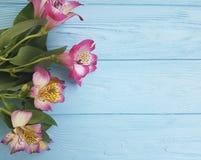 Headflower di Alstroemeria su estate di legno blu di compleanno Immagini Stock Libere da Diritti