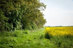 Headland поля стоковые фотографии rf