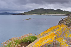 Headland at Mellon Udrigle. Flowers and Lichen on a headland at Mellon Udrigle, Sutherland, NW Scotland Stock Image