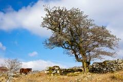 Headland Warren Royalty Free Stock Photography