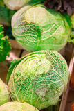 Heads of cabbage Royalty Free Stock Photos