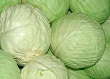 Head cabbage. The fresh cabbage is laid out on a counter royalty free stock photo