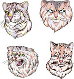 Heads of cats Royalty Free Stock Images