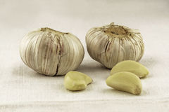 Heads and cloves of garlic Royalty Free Stock Photos