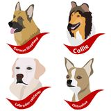 Heads of dogs, dogs. Stock Photography