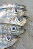 Heads of five baltic herring Stock Photos