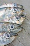 Heads of five baltic herring Stock Photos