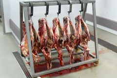 Heads of freshly slaughtered of cattle. stock images