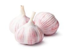 Heads of garlic Stock Photography