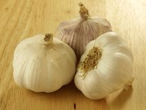 Heads of garlic. Three heads of ecological garlic Stock Images
