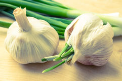 Heads of garlic on a background of green onions Stock Photos