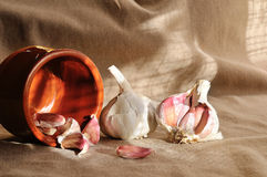 Heads of garlic in a bowl of mud on a fabric brown Royalty Free Stock Photography